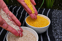 Golden rice (right) compared to white rice (left).