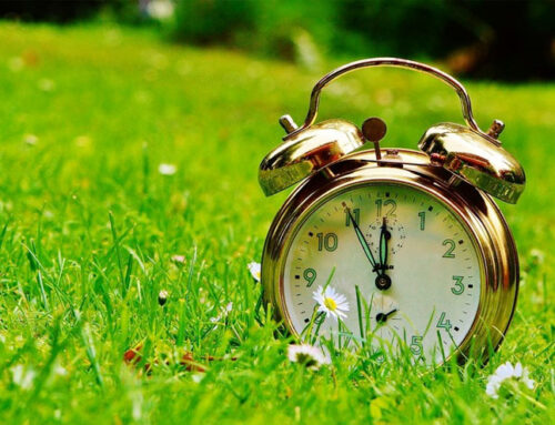 Tick Tock ~ It's Springtime!